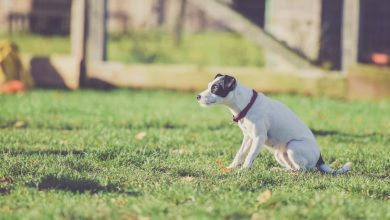 A dog in a field. Stock photo.