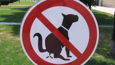 """Photo of Kilkenny is facing a """"dog poo pandemic"""", says local councillor"""