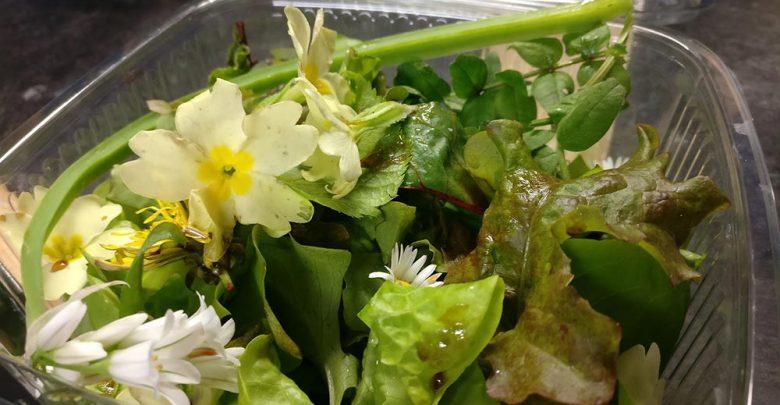 Wild garden salad. Photo: Ken McGuire/KCLR