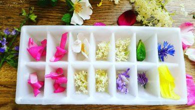 Floral ice cubes. Photo: Francis Nesbitt/@nesbittf (Twitter)